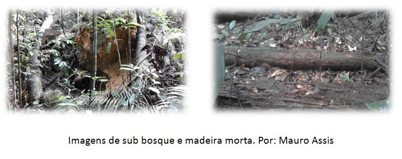 sub_bosques