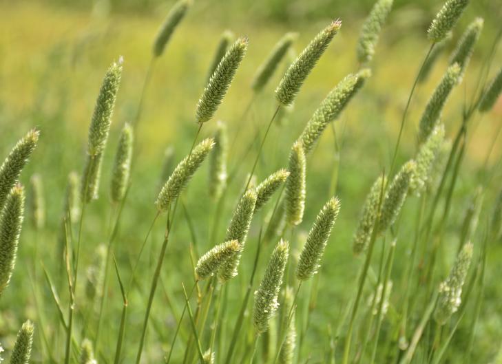 Espécies de plantas que tiram mais CO2 da atmosfera